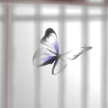 《 芒果街老爸 - Caged Butterfly 》( Mango Street Papa - Caged Butterfly )