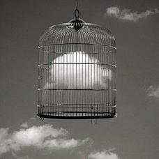 -Free Will-
