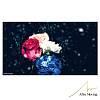 WINTER FLOWER 0208UPDATE DEMO