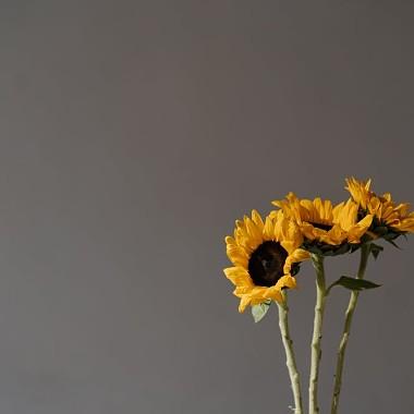昨天我收到自己送的太陽花