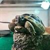 一首烏龜的歌 (Demo)
